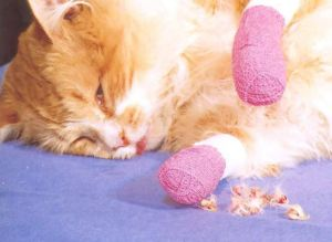 How Much Does Getting A Cat Declawed Cost