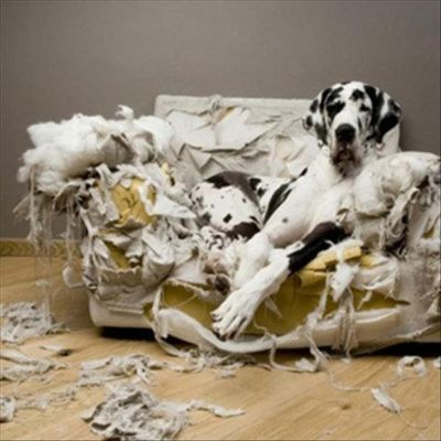 Dog Ruined The Couch